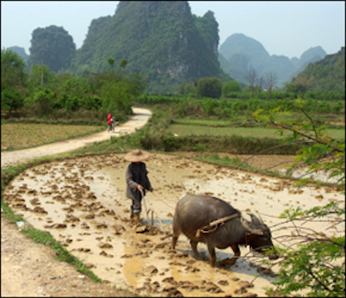Chinese Farms Generate More Water Pollution Than Factories