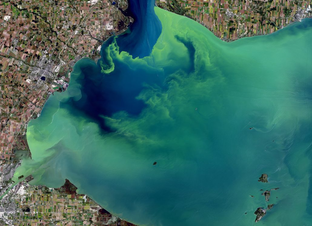Regulators Will Soon Know A Lot More About Algal Toxins In